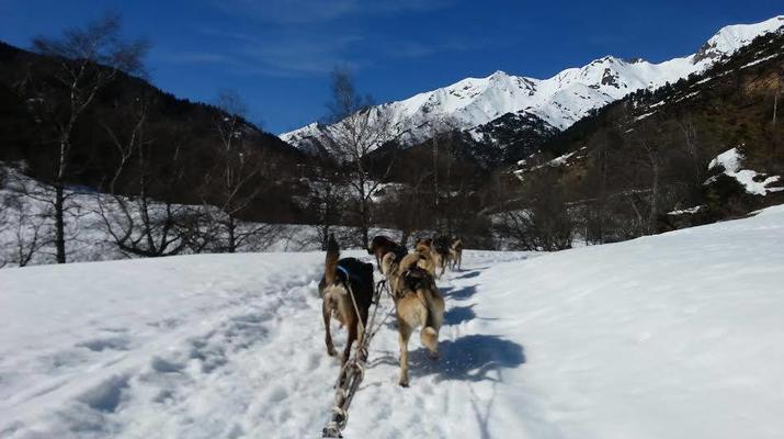 Dog sledding-Andorra-Mushing excursion in Port d' Envalira, Andorra-2