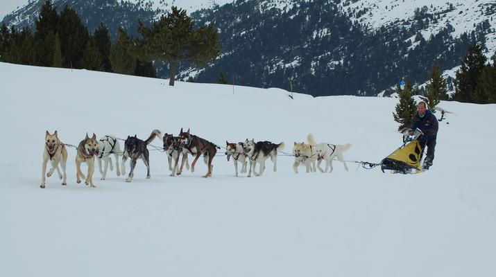 Dog sledding-Andorra-Mushing excursion in Port d' Envalira, Andorra-4
