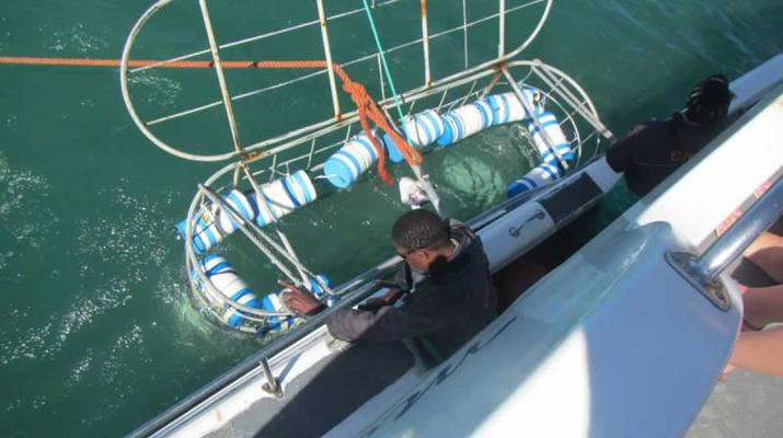 Shark Diving-Gansbaai-Cage diving with great white sharks in Gansbaai-3