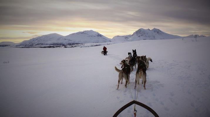 Dog sledding-Tromsø-Full day Arctic dog sledding expedition in Tromsø-6