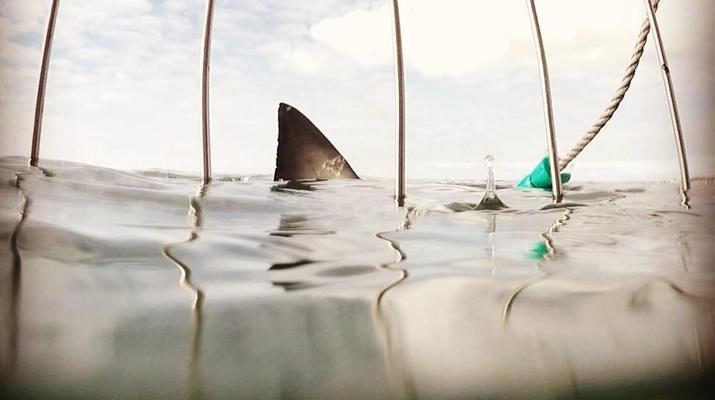 Shark Diving-Mossel Bay-White shark cage diving in Mossel Bay-6