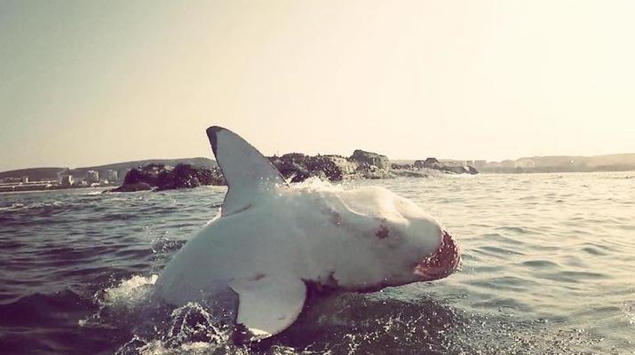 Shark Diving-Mossel Bay-White shark cage diving in Mossel Bay-3