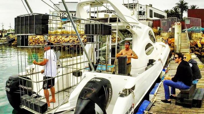 Shark Diving-Mossel Bay-White shark cage diving in Mossel Bay-5