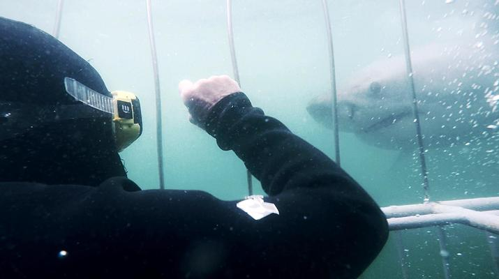 Shark Diving-Mossel Bay-White shark cage diving in Mossel Bay-7