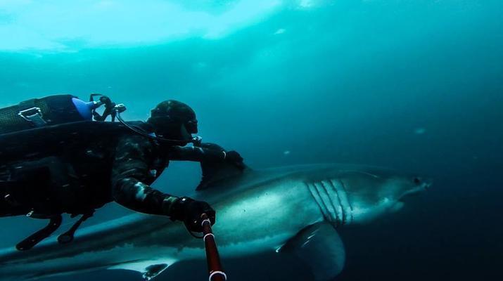 Shark Diving-Durban-Tiger shark diving excursion near Durban-5