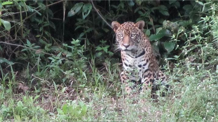 Randonnée / Trekking-Guyane-Expédition trekking dans la Forêt Amazonienne en Guyane Française-5