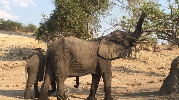 Safari-Victoria Falls-Safari au Chobe à Victoria Falls-2