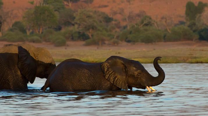 Safari-Victoria Falls-Safari au Chobe à Victoria Falls-1