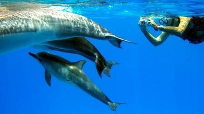 Snorkeling-São Miguel-Snorkeling with dolphins in Sao Miguel-6