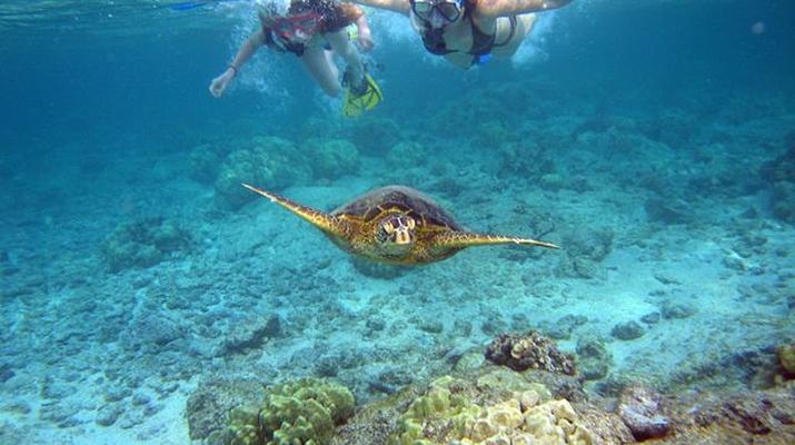 Snorkeling-Zakynthos (Zante)-Snorkeling excursion from Tsilivi in Zante-1