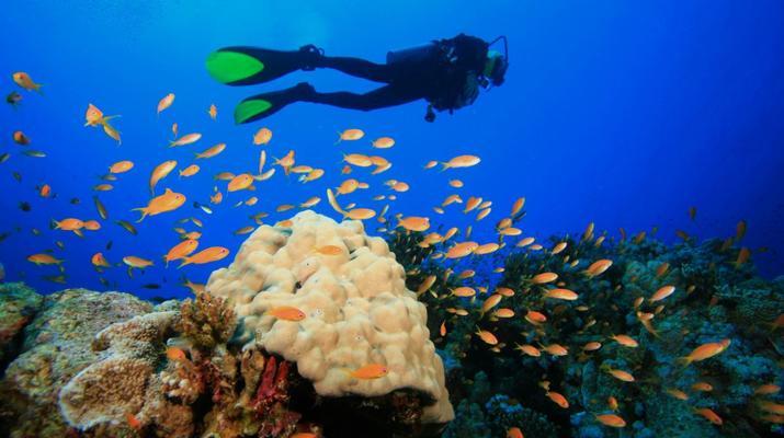 Plongée sous-marine-Réserve Cousteau-Stage de Plongée FFESSM dans la Réserve Cousteau en Guadeloupe-1