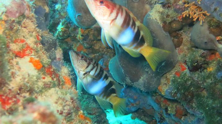 Scuba Diving-Split-Discover scuba diving in Split-7