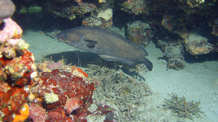 Scuba Diving-Split-Discover scuba diving in Split-6