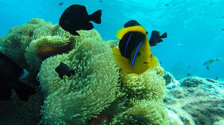Snorkeling-Bora Bora-Excursion snorkeling dans le lagon à Bora Bora-5