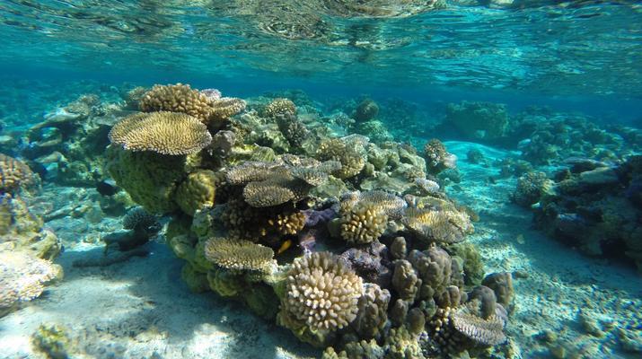 Snorkeling-Bora Bora-Excursion snorkeling dans le lagon à Bora Bora-6