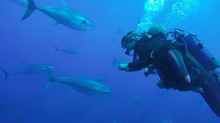 Plongée sous-marine-Malte-Cours PADI Discover Scuba Diving à Mellieha Bay, Malte-6