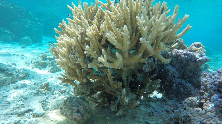 Snorkeling-Bora Bora-Excursion snorkeling dans le lagon à Bora Bora-3