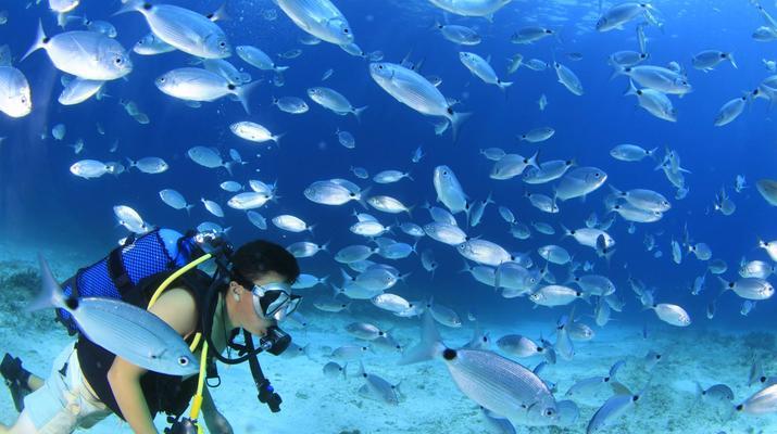 Plongée sous-marine-Malte-Cours PADI Open Water dans la baie de Mellieha, Malte-4
