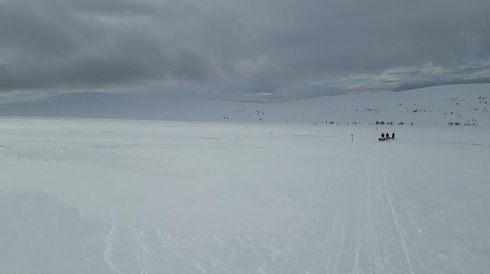 Chiens de traîneau-Parc national de Femundsmarka-Excursions de mushing à Os, près du parc national de Femundsmarka-3
