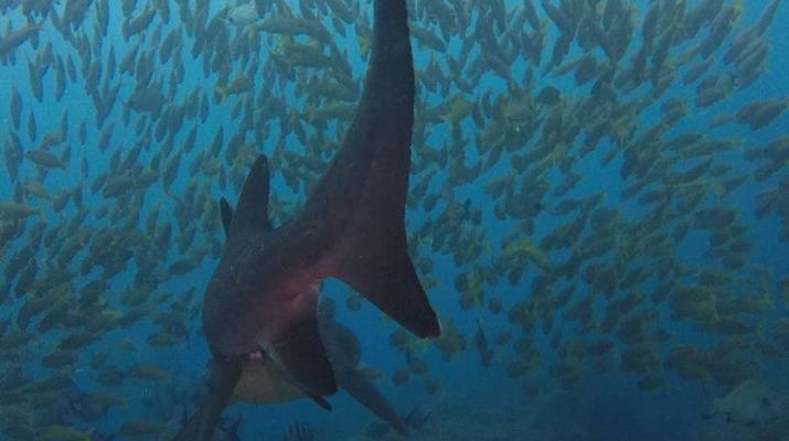 Scuba Diving-Durban-Reef and wreck scuba diving excursions on the Umkomaas coast, near Durban-6