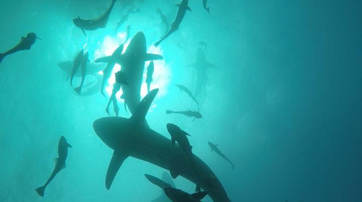 Scuba Diving-Durban-Reef and wreck scuba diving excursions on the Umkomaas coast, near Durban-1
