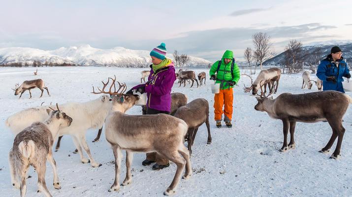Reindeer sledding-Tromsø-Reindeer sledding excursions in Tromso-4