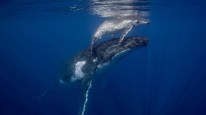 Snorkeling-Tahiti-Snorkeling et Observation des Baleines et Dauphins à Tahiti-6