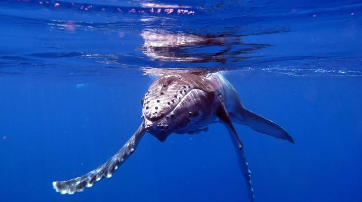 Snorkeling-Tahiti-Snorkeling et Observation des Baleines et Dauphins à Tahiti-5