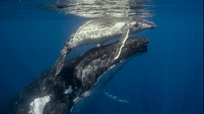 Snorkeling-Tahiti-Snorkeling et Observation des Baleines et Dauphins à Tahiti-4