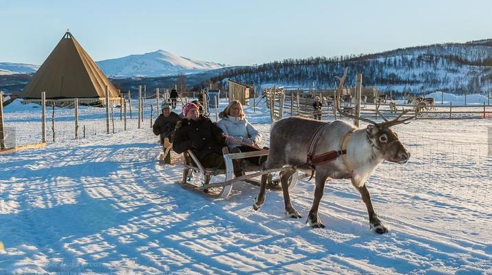 Reindeer sledding-Tromsø-Reindeer sledding excursions in Tromso-3