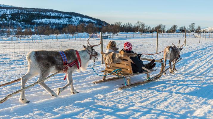 Reindeer sledding-Tromsø-Reindeer sledding excursions in Tromso-6