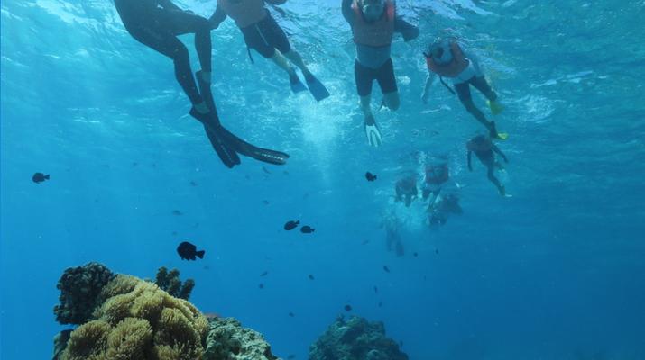 Snorkeling-Tahiti-Snorkeling et Observation des Baleines et Dauphins à Tahiti-3