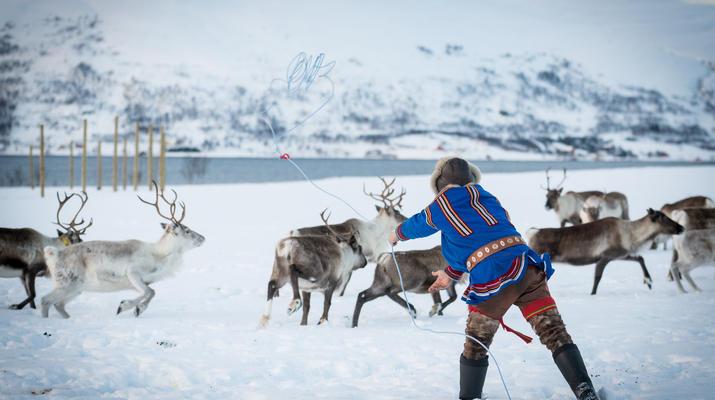Reindeer sledding-Tromsø-Reindeer sledding excursions in Tromso-2
