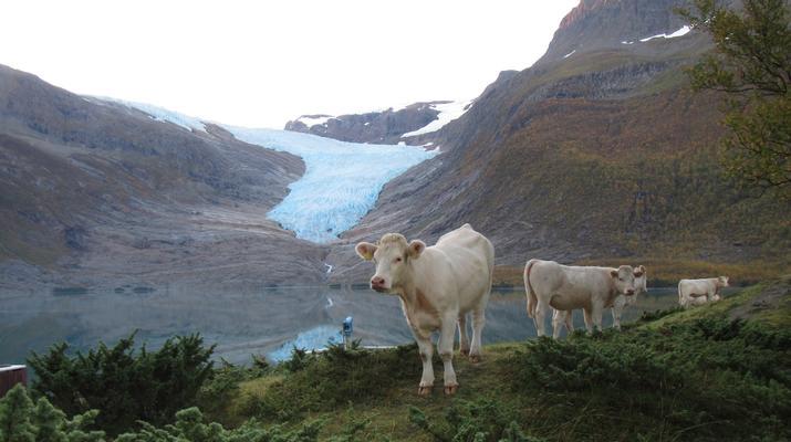 Glacier hiking-Halsa-Hiking trip on Svartisen glacier in Northern Norway-6