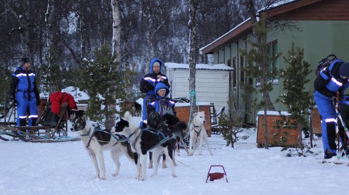 Dog sledding-Tromsø-Dog sledding day excursion in Tromsø-3