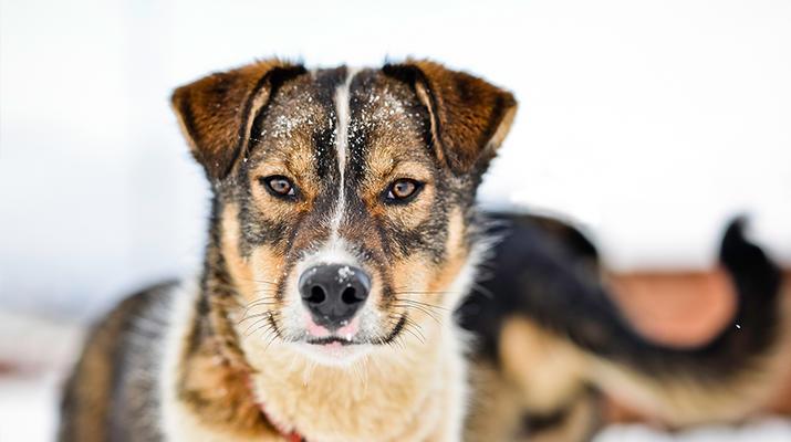 Dog sledding-Tromsø-Arctic morning dog sledding excursion in Tromsø-4