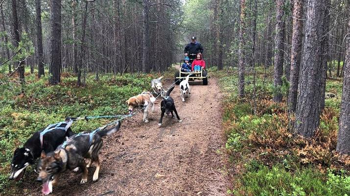 Dog sledding-Tromsø-Dog sledding on wheels in Tromsø-5
