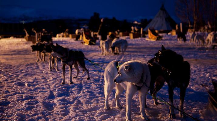 Dog sledding-Tromsø-Arctic evening dog sledding excursion in Tromsø-1