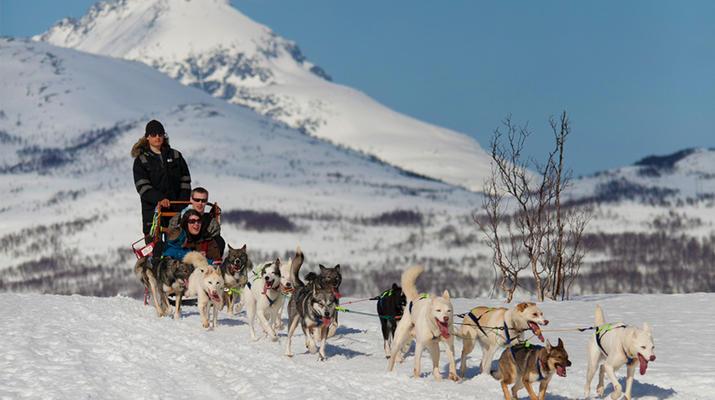 Dog sledding-Tromsø-Arctic morning dog sledding excursion in Tromsø-1