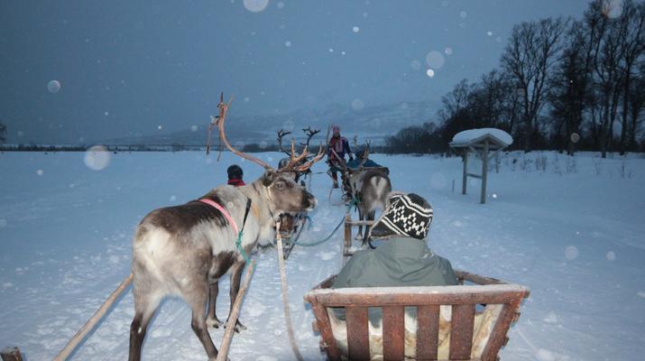 Reindeer sledding-Tromsø-Reindeer sledding day trip in Tromsø-1
