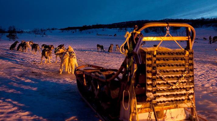 Dog sledding-Tromsø-Arctic evening dog sledding excursion in Tromsø-3
