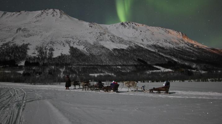 Reindeer sledding-Tromsø-Northern Lights Reindeer sledding trip near Tromsø-3