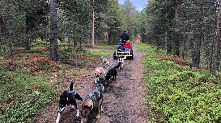 Dog sledding-Tromsø-Dog sledding on wheels in Tromsø-1