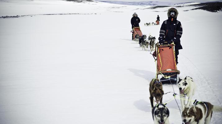 Dog sledding-Tromsø-Arctic morning dog sledding excursion in Tromsø-5