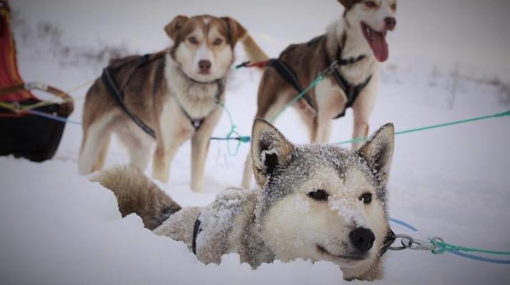 Dog sledding-Tromsø-Arctic morning dog sledding excursion in Tromsø-6