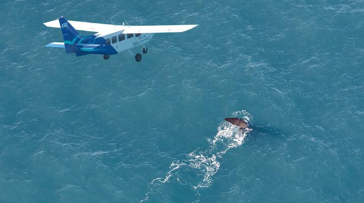 Scenic Flights-Kaikoura-Whale watching flight from Kaikoura-2