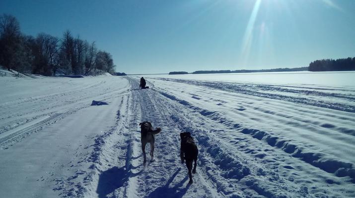 Chiens de traîneau-Kiruna-Randonnée matinale en traîneau à chiens, près de Kiruna-4