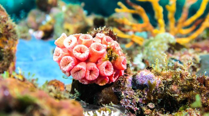 Plongée sous-marine-Saint-François-Bi-Plongées Exploration à Saint-François, Guadeloupe-7