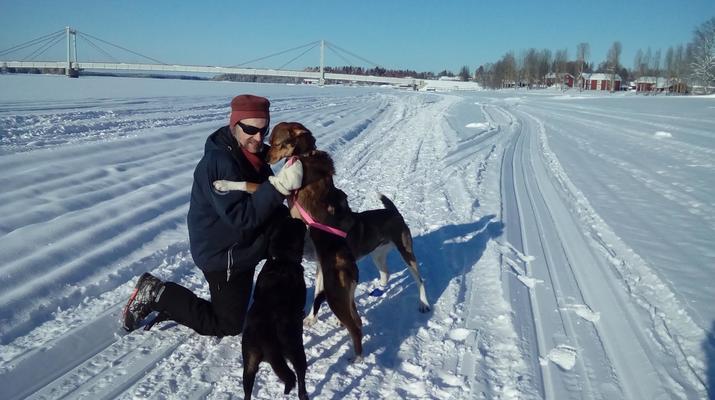 Chiens de traîneau-Kiruna-Randonnée matinale en traîneau à chiens, près de Kiruna-3