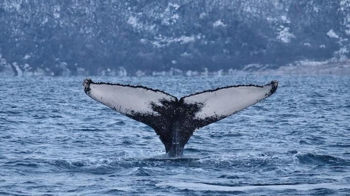 Wildlife Experiences-Tromsø-Whale Watching Safari & Fjord Cruise from Tromso-4
